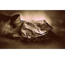 Dried up leaf Photographic Print
