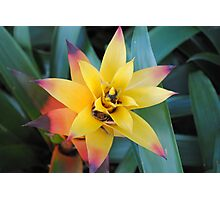 Tropical Yellow Flower Photographic Print