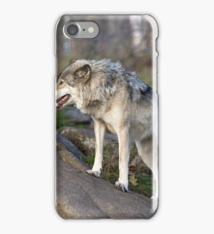 A lone timber wolf  iPhone Case/Skin