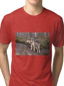 A lone timber wolf  Tri-blend T-Shirt