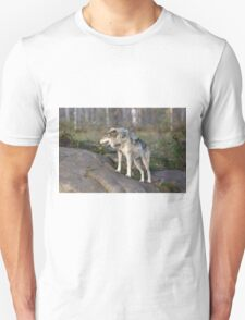 A lone timber wolf  T-Shirt