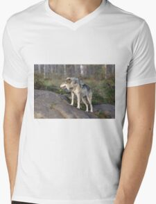 A lone timber wolf  Mens V-Neck T-Shirt
