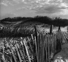 Dune Fence at Sandy Hook by Debra Fedchin