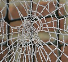 Ice Web Close Up by relayer51