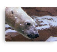 Diving Polar Bear Canvas Print