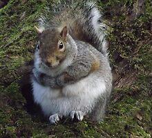 Resting Squirrel by jorafc