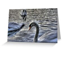Swans HDR Greeting Card
