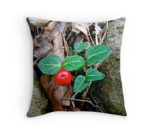 Partridge Berry Berry - Mitchella repens Throw Pillow