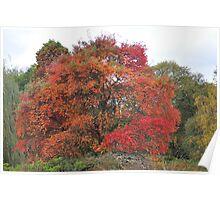 Autumn in Isabella Plantation Poster