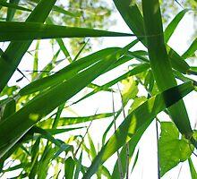 Sunlit Grass 2 by Jessica Liatys