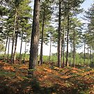 Wareham Forest, Dorset, England by MagsWilliamson