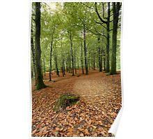 Portglenone Forest Poster