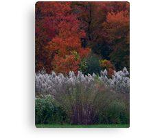 Fall Colors (1387) Canvas Print