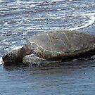 Sea Turtle by Soulmaytz
