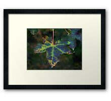 Maple Leaf (1278) Framed Print