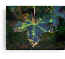 Maple Leaf (1278) Canvas Print