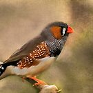 Zebra Finch (Taeniopygia guttata) by Robin Webster