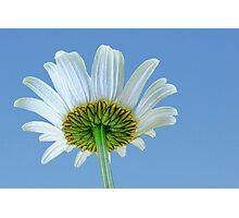 The Other Side of a Daisy Photographic Print