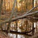 Felled tree at Phinizy Swamp by yakkphat