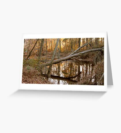 Felled tree at Phinizy Swamp Greeting Card