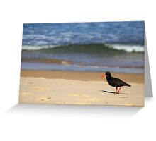 Sooty Oystercatcher at Pebbly Beach Greeting Card