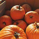 Orange Pumpkins by Eliza Sarobhasa