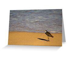 Plover at Pebbly Beach Greeting Card