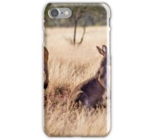 Red Kangaroos, Currawinya National Park iPhone Case/Skin