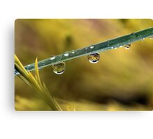 Drop of life Canvas Print