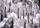 Winter Came Early (abstract) by Laurie Minor