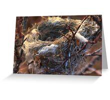 Empty Nest Greeting Card