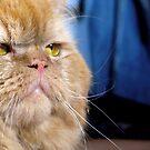 Cat face by Honeyboy Martin