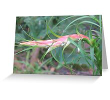 The Raw Prawn Greeting Card