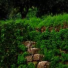 Stairway to the Green. by Turi Caggegi