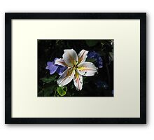 Arena Lily with Hydrangea Framed Print