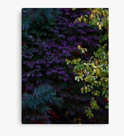 Fall Colors (1447) Canvas Print