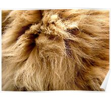 Persian cat hair Poster
