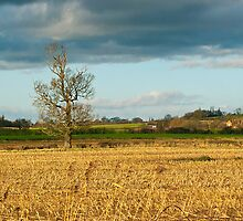 Country View by SiClews