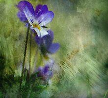 Wild Pansy by Carina514