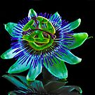 Passionfruit Flower by Tom Newman