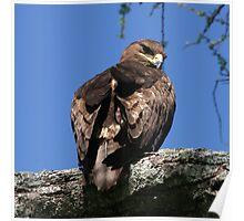 Eagle Eyed Poster