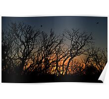 Sunset at the Wetlands Poster