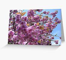 Flowering Cherry Greeting Card
