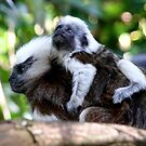 Carry me Mum! by Coloursofnature