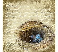 Bird's Nest with Blue Eggs  Photographic Print