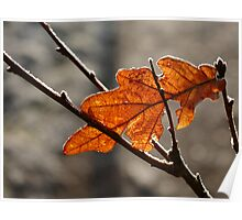 Frosted Leaf Poster
