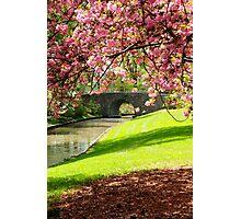 Blossoms... Photographic Print