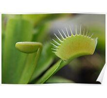 Carnivorous plant Poster
