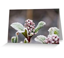 Frostii Greeting Card