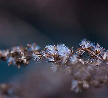 Frosty January by Evogance